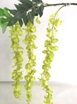 dancing orchid x 3 stem - lime